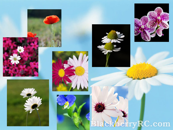 Beautiful flowers in pairs for 9100 wallpapers pack