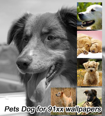 <b>Pets Dog for 360x400 wallpapers pack</b>