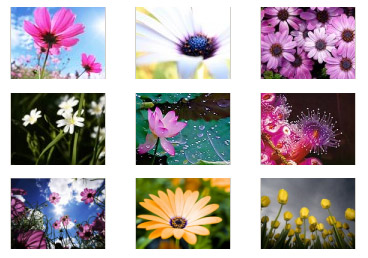 flowers for blackberry 320x240 wallpapers pack