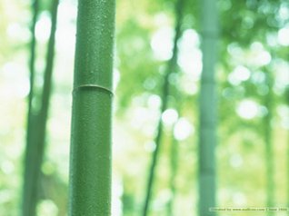 bamboos pictures wallpapers