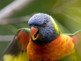 Cute parrot for BB 9630 wallpapers