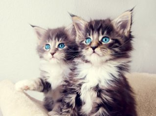 Two Kittens for 8980 wallpapers