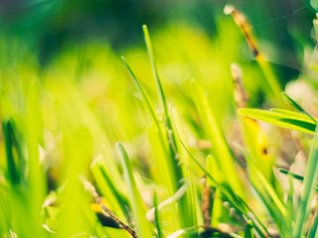 Grass 320x240 wallpapers