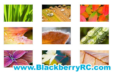 <b>Colorful Plants for 1024x600 PB wallpaper</b>