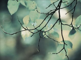 Twigs 640x4blackberry themes free download blackberry apps twigs 640x480 wallpapers hd blackberry voltagebd Gallery