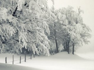 Big Snows for BB 9900,9930,9981 wallpapers