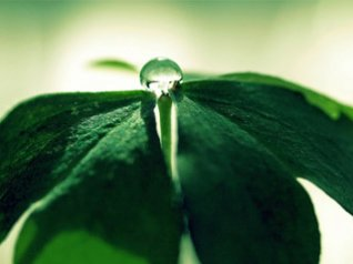 Clover Drops wallpaper bb torch 9800