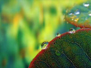 beautiful plants 480x320 wallpaper