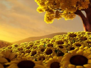 Sunflower for 360x480 hd wallpapers