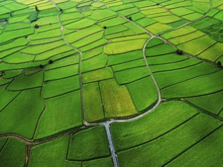 Rice Paddy for 640x480 wallpapers