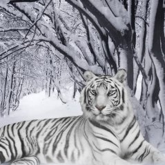 <b>Awesome Snow Leopard for blackbeery Q10 Wallpaper</b>