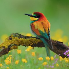 <b>Beautiful bird wallpaper</b>