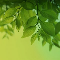 Green leaf HD Galaxy S4 wallpaper