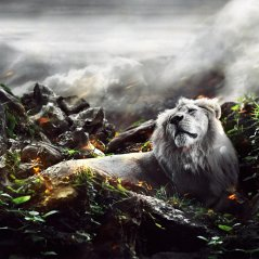 <b>Jungle Lion wallpaper</b>