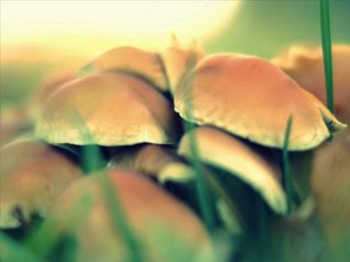 Mushroom blackberry backgrounds wallpaper