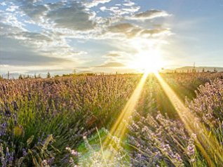 <b>Sunshine 640x480 9900 wallpaper</b>