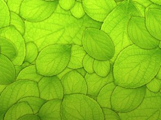 <b>Pure Green Leaf Texture Pattern Background wallpa</b>