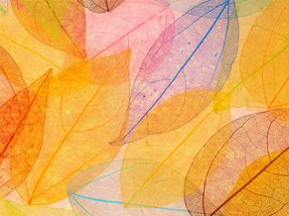 <b>The leaves of creative texture wallpaper</b>