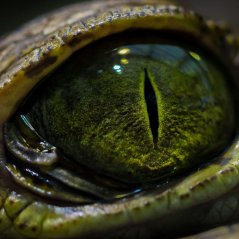 Crocodile eye for q20,q5, z10 wallpaper
