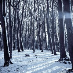Cold Winter Forest Snow Nature Mountain
